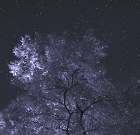 Infrared photo of trees and stars