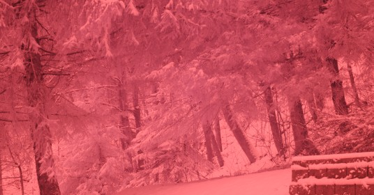 Infrared photo of hemlock trees