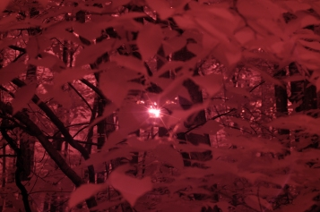 Infrared photo of sun behind tree leaves