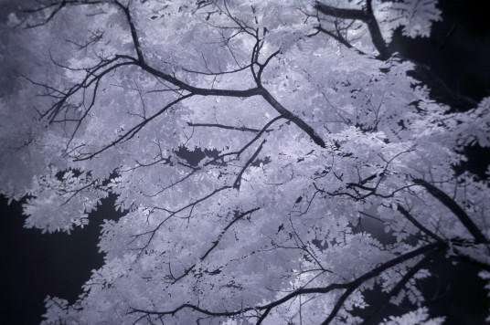 Infrared photo of trees